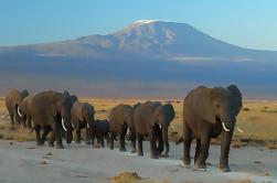 2 días Safari del Parque Nacional de Amboseli