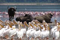 Excursión de un día al lago Nakuru desde Nairobi