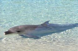 Tangalooma Resort Crucero por el día de Moreton Island con alimentación opcional de delfines