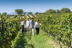 Torres Wine Cellars y Excursión Guiada de Montserrat y Sitges desde Barcelona