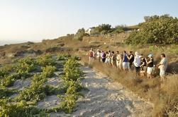 Tour de vinos en pequeños grupos de Santorini con enólogo profesional