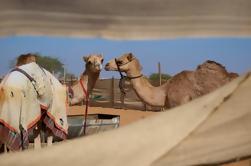 Excursión por la ciudad de Al Ain - The Garden City