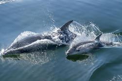 Tour de observación de delfines y focas de medio día desde Walvis Bay