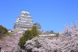 Tour Sakura Cherry Blossom de 11 Días desde Tokio