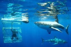 Excursão do mergulho do tubarão da cidade do Cape