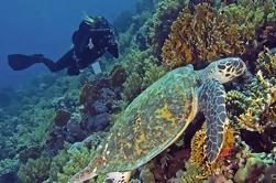 Buceo diario de buceo de Hurghada