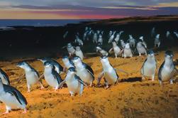 Phillip Island: Tour de pingüinos, koalas y canguros de Melbourne