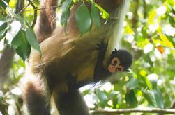 Excursión de un día a Cobá y Monkey Adventure en Punta Laguna
