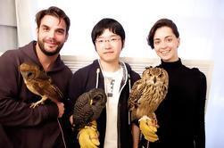 Owl Cafe Experiencia en Akihabara