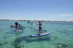 Shoalwater Stand-Up Paddleboarding Lección y Tour