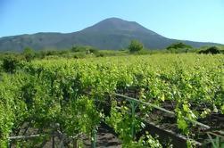 Pompeii and Vesuvius Wine-Tasting Tour