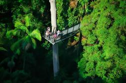 Excursión de un día a Mount Tamborine desde Gold Coast incluyendo Skywalk