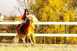 Bucareste Equitação Experiência