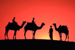 Sunset Camel Ride en la palmera de Marrakech