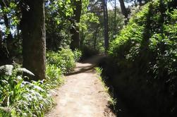 Paradise Valley - Levada Walk