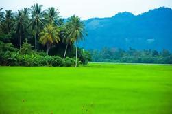 Tour privado de medio día: Village Lifestyle en Balik Pulau