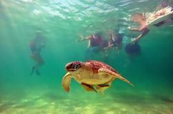 Torneo de Tortugas y Cenotes