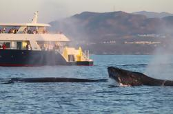 Crucero de observación de ballenas