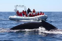 Zodiac Whale Watching Adventure en Los Cabos