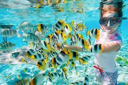 Viaje de Snorkeling de día completo en la isla de Giftun desde Hurghada