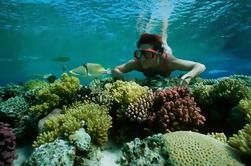 Viaje de snorkel desde Sharm El-Naga Bay Hurghada