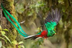Tour de Observación de Aves en Monteverde