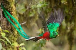 Caminata del Bosque Nuboso de Monteverde