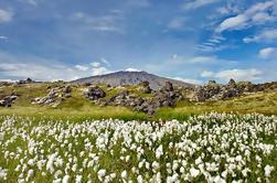 Snæfellsjökull halvøya Dagstur fra Reykjavik: Kirkjufell Mountain og Djupalonssandur Beach