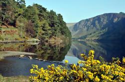 Tour de Wicklow, Powerscourt y Glendalough desde Dublín