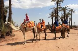 Sunset Camel Ride Tour in Marrakech Palms Grove Bereich