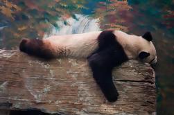 Visite Privée: Panda House Visite Et Croisière Au Palais D'été Avec Le Dîner Impérial