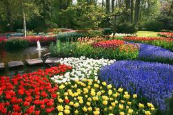 Jardins de Keukenhof e excursão dos campos da tulipa de Amsterdão