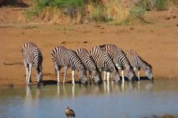 Pilanesberg Day Tour de Joanesburgo ou Pretória