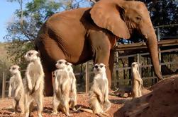 Elephant Sanctuary Tour de Joanesburgo ou Pretória