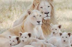 Lion Park Tour de Joanesburgo ou Pretória