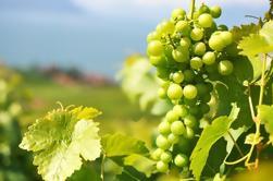Pasión por el vino - Vino privado en Azeitão