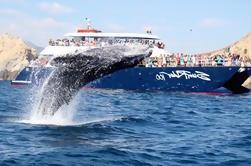 Cena Crucero de observación de ballenas en Los Cabos