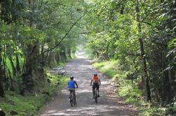 3 días de ciclismo y senderismo; Naturaleza, Café, Cultura y Valle de Cocora desde Pereira
