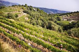 Tour de vinos ecológicos desde Niza