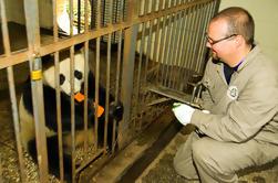 Voluntariado de la base de la panda gigante de Dujiangyan de un día y visita del sistema de riego