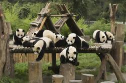 Tour de un día: Chengdu Panda base y clase de cocina