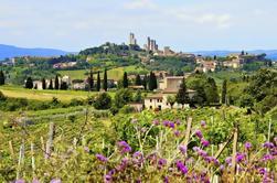 Excursión de un día a los vinos de la Toscana desde Roma