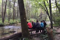Explorez une excursion à Smoky Mountain