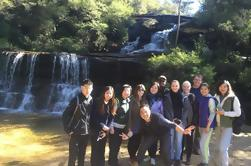 Montañas azules privadas y fauna australiana Eco Tour