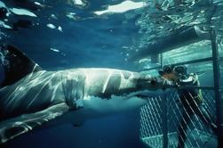 Shark Diving Private Day Tour para Gansbaai da Cidade do Cabo