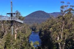 Excursión de día activa de Tahune Airwalk desde Hobart Incluyendo cuevas de Hastings