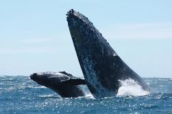 Tour de observación de ballenas en Los Cabos