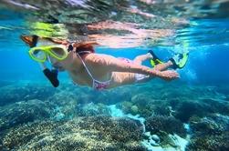 Costa del Sotavento Crucero de medio día para delfines y snorkel