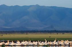 Safari Todo Incluido de 8 Días desde Nairobi