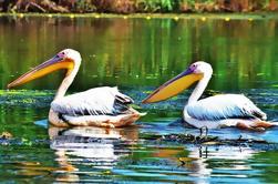 Tour privado de 9 días en el Delta del Danubio desde Bucarest